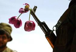 """美丽的""""罂粟花"""":索马里海盗经济"""