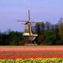 荷兰乡村 返璞归真的田园牧歌