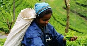 斯里兰卡、尼泊尔的出游建议