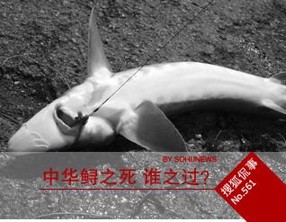中华鲟之死