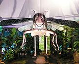 广州跨世纪机器人博览会,森林世界蝗虫 Locust