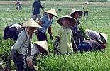 取消农业税