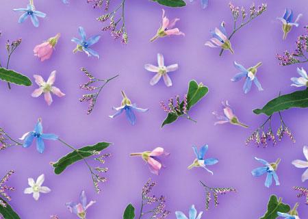 纯色紫色花手绘