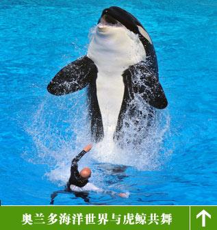 奥兰多海洋世界 与虎鲸同舞与鲨鱼共餐