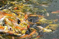团结湖 天宇观赏鱼市场