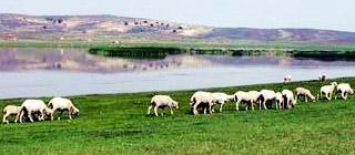 金莲川草原