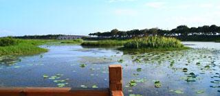 南沙湿地公园