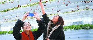 新雪场、新庙会玩新鲜 昌平过大年推出新花样