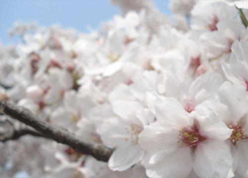春游上海植物园 去看今春赏花大会