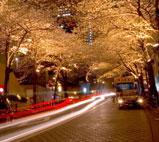 日本街道,日本留学,日本留学条件,日本留学生,日本留学费用,日本留学考试,日本留学签证,日本留学中介,日本留学语言,日本留学中介