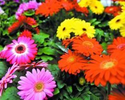 广州:花儿披马甲过新春