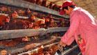 河南:两地共确诊2例H7N9禽流感病例