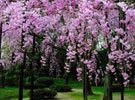 日本一地赏樱6日半自由行