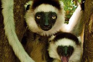 马达加斯加:远离非洲大陆的孤岛