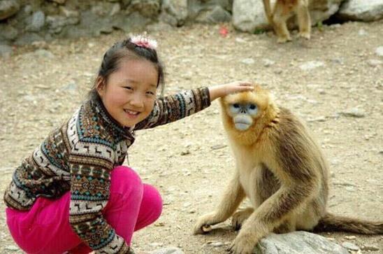 宝宝和金丝猴的互动