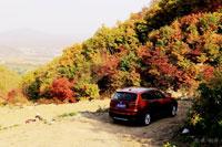 枫叶又红草木一秋