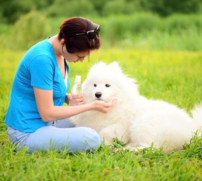 孕期真不能养宠物吗?