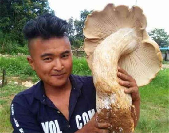 原标题:施甸旧城乡村民捡到巨型野生菌 菌根比腿粗!