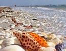 澳大利的亚丹汉姆 贝壳堆积如山种类繁多色彩鲜艳
