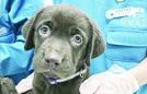 成都夫妇捐狗狗当搜救犬