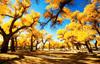 这些地方满足你对秋色的幻想