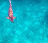 一年只开放150天的绝美海岛